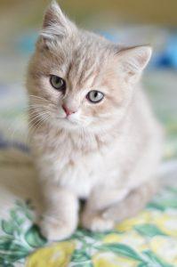 cat-1796834_1920