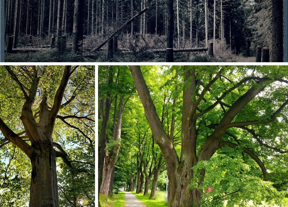 Zpráva od Bytostí stromů